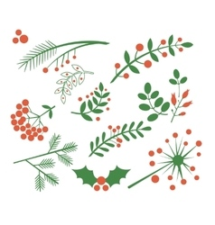 Red Berries Fir and Leaves vector image vector image