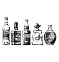bottles of alcohol Distilled beverage vector image