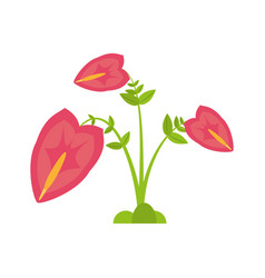 anthurium leaf plant exotic vector image
