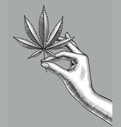 female hand with a cannabis leaf vector image