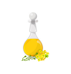 Glass bottle of rapeseed food oil organic healthy vector