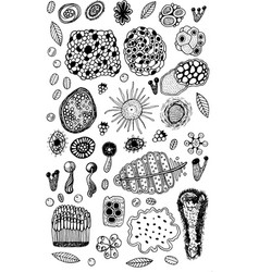 moss and floral elements set ink graphic artwork vector image