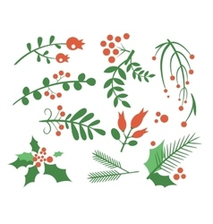 Red Berries Branches Fir and Leaves vector