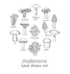 set mushrooms for design menus recipes vector image