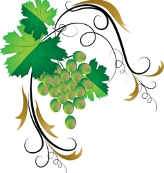 decorative grapevine vector image vector image