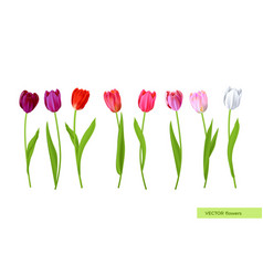 Big isolated tulips flowers set vector