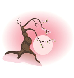 flowering bonsai vector image vector image