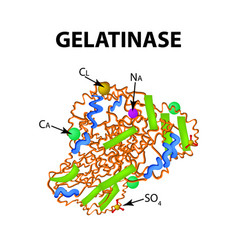 gelatinase is a molecular chemical formula enzyme vector image