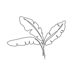 one continuous line drawing tropical banana leaf vector image