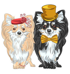 set dogs chihuahua lady and gentelman vector image