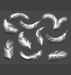 White feathers fluffy twirled feather isolated on vector