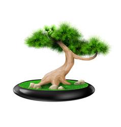 Decorative bonsai tree pine in pot vector