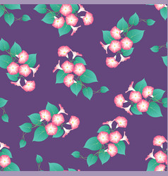 pink morning glory on purple background vector image