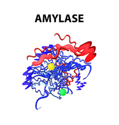 Amylase chemical formula enzyme of the pancreas vector
