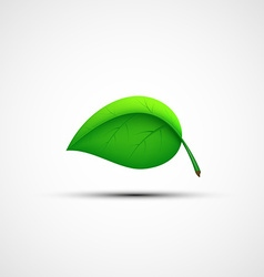 Green leaf logo vector image