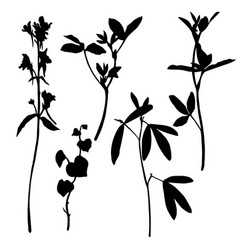 set herbs and flowers silhouettes vector image