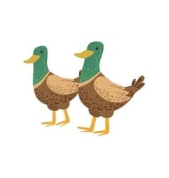 Two Male Ducks Walking vector image vector image