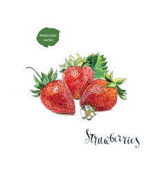 3 fresh strawberries with flower and leaves vector image vector image
