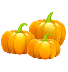 Three beautiful pumpkins without leaves vector