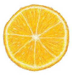 Unique style of orange fruit cross section closeup vector