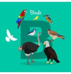 Birds with Letter B Isolated ABC Alphabet vector image vector image