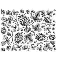 Hand drawn background of arctic bramble berries vector