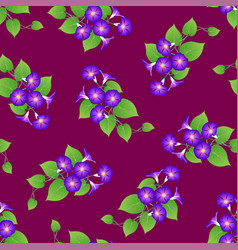 purple morning glory on violet background vector image