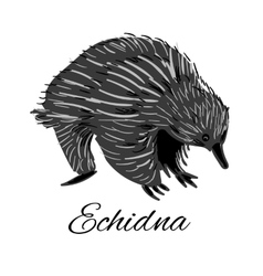 Echidna icon in doodle style Logotype for vector image vector image