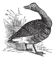 White fronted goose engraving vector image vector image