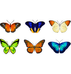 Butterflies image for web design and print vector