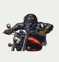 cruel gorilla biker vintage colorful concept vector image