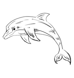 dolphin drawing on white background vector image