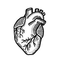 heart organ icon hand drawn style vector image
