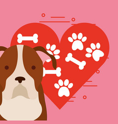 love dog pet vector image