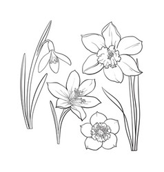 Set of summer flowers daffodil snowdrop crocus vector