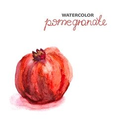 Background with watercolor pomegranate vector image vector image