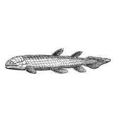 Bone Scale fish engraved vector image vector image
