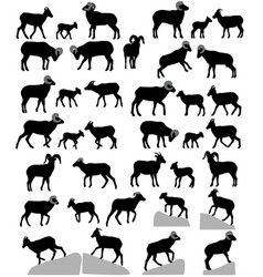 Collection of silhouettes of bighorn sheeps rams vector