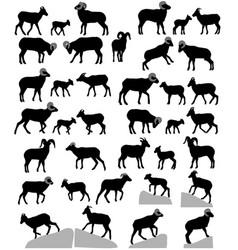 Collection silhouettes bighorn sheeps rams vector