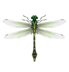 Gomphus vulgatissimus dragonfly vector