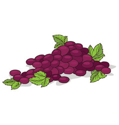Isolate ripe grape fruit vector