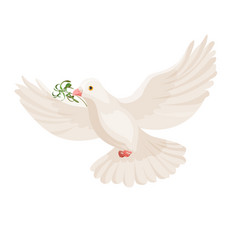 white dove with grass in beak flying bird vector image