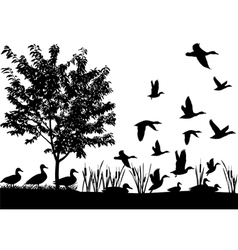Flock of ducks vector image vector image