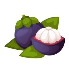 Fresh lychees vector image
