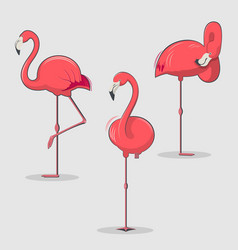 Set of pink flamingos bird in different poses vector