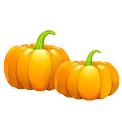 two beautiful pumpkins without leaves vector image