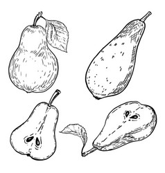 set of hand drawn pears on white background vector image
