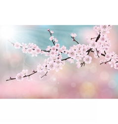 Blossom cherry tree branch vector