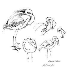 Flamingo sketch vector image