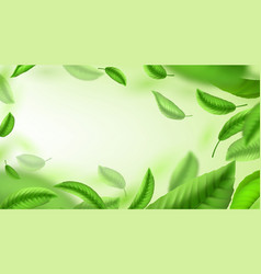 Tea leaves background realistic green falling and vector